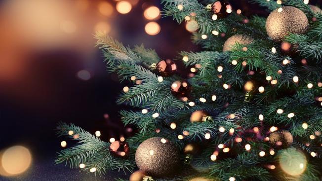 ¿Cuál es el árbol de Navidad más ecológico?